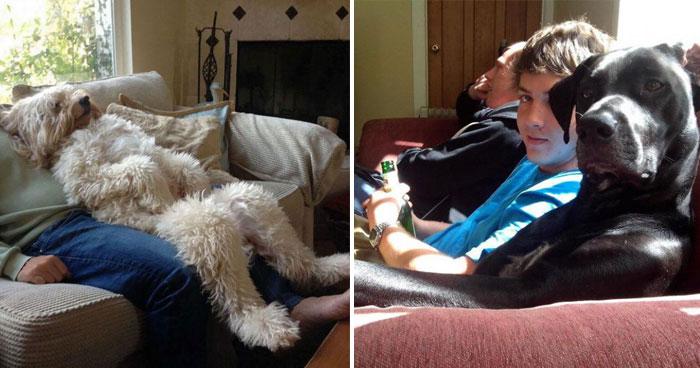 Photo of Estas fotografías demuestran que algunos perros se creen humanos