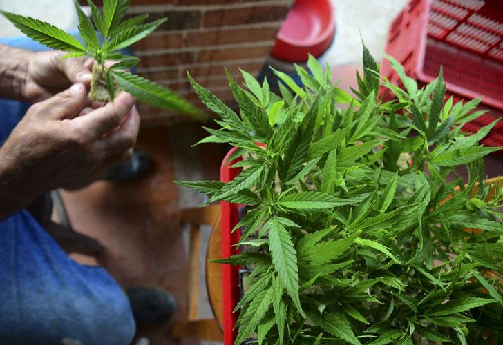 Photo of La mujer detenida por cannabis también poseía drogas sintéticas