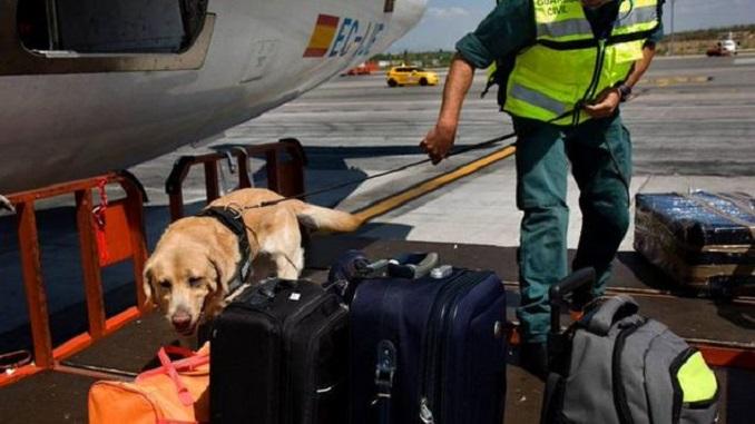 Photo of Detenido un colombiano por intentar volar con 68 aves ocultas en dos maletas