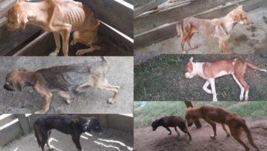 Photo of Denuncian Unidad de Protección Animal deja morir de hambre a perros y gatos